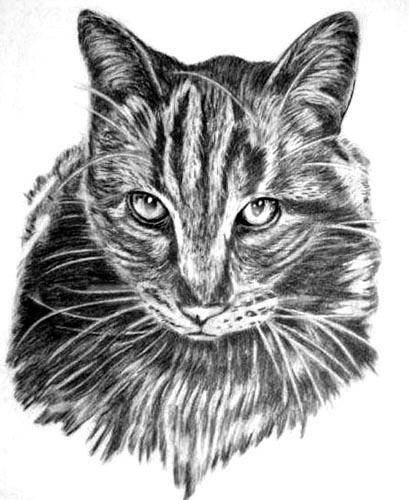 desenho de felinos